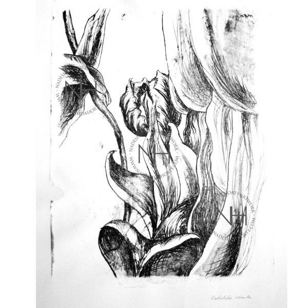 Tulpen für Tulpenliebhaber