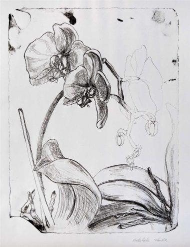 Florale Welten mit Tulpen und Orchideen